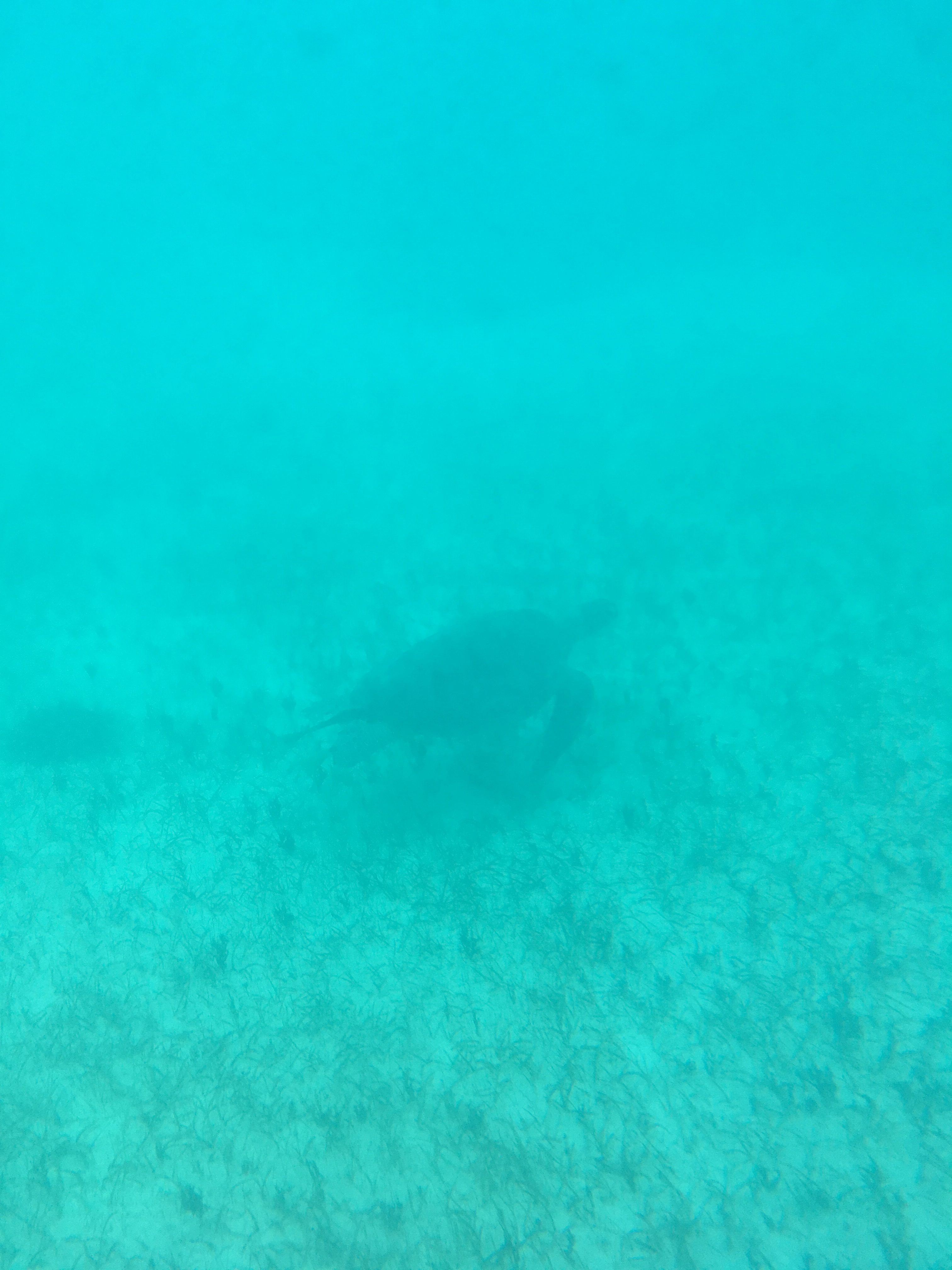 The best picture that I got of a turtle! From the Underwater Explorer Semi-Submarine. Turks & Caicos Island Guide.