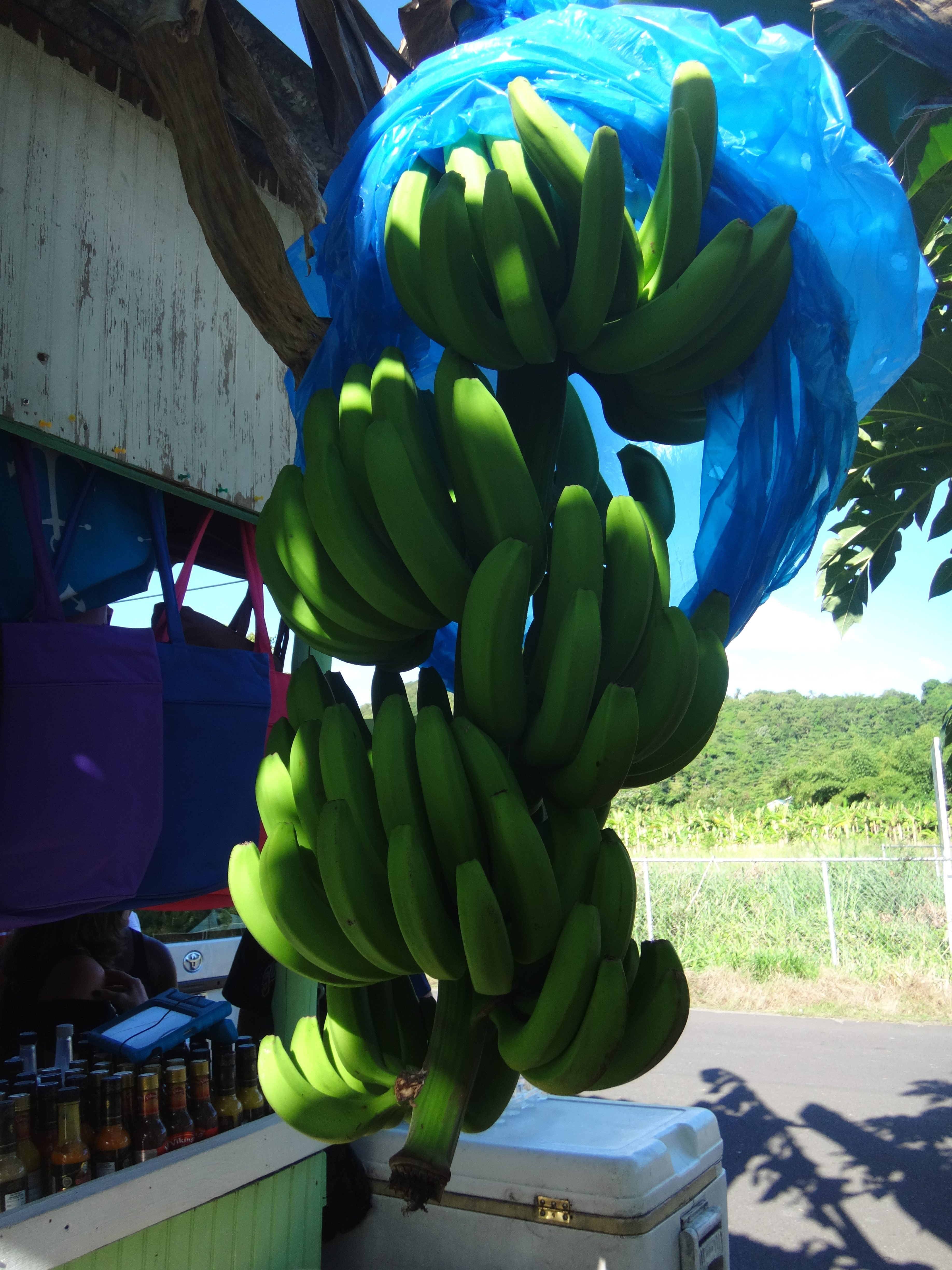 Banana Plantation - Cosol Tours, Best Shore Excursion in St. Lucia