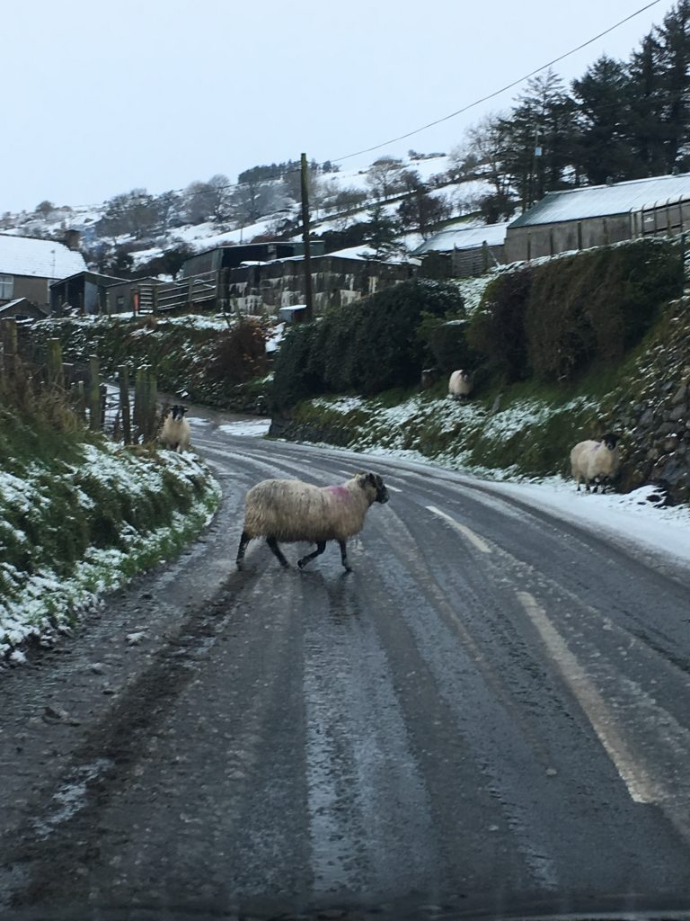 Sheep in the road are to be expected on a Northern Ireland roadtrip.